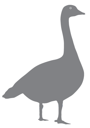 Benny the Goose