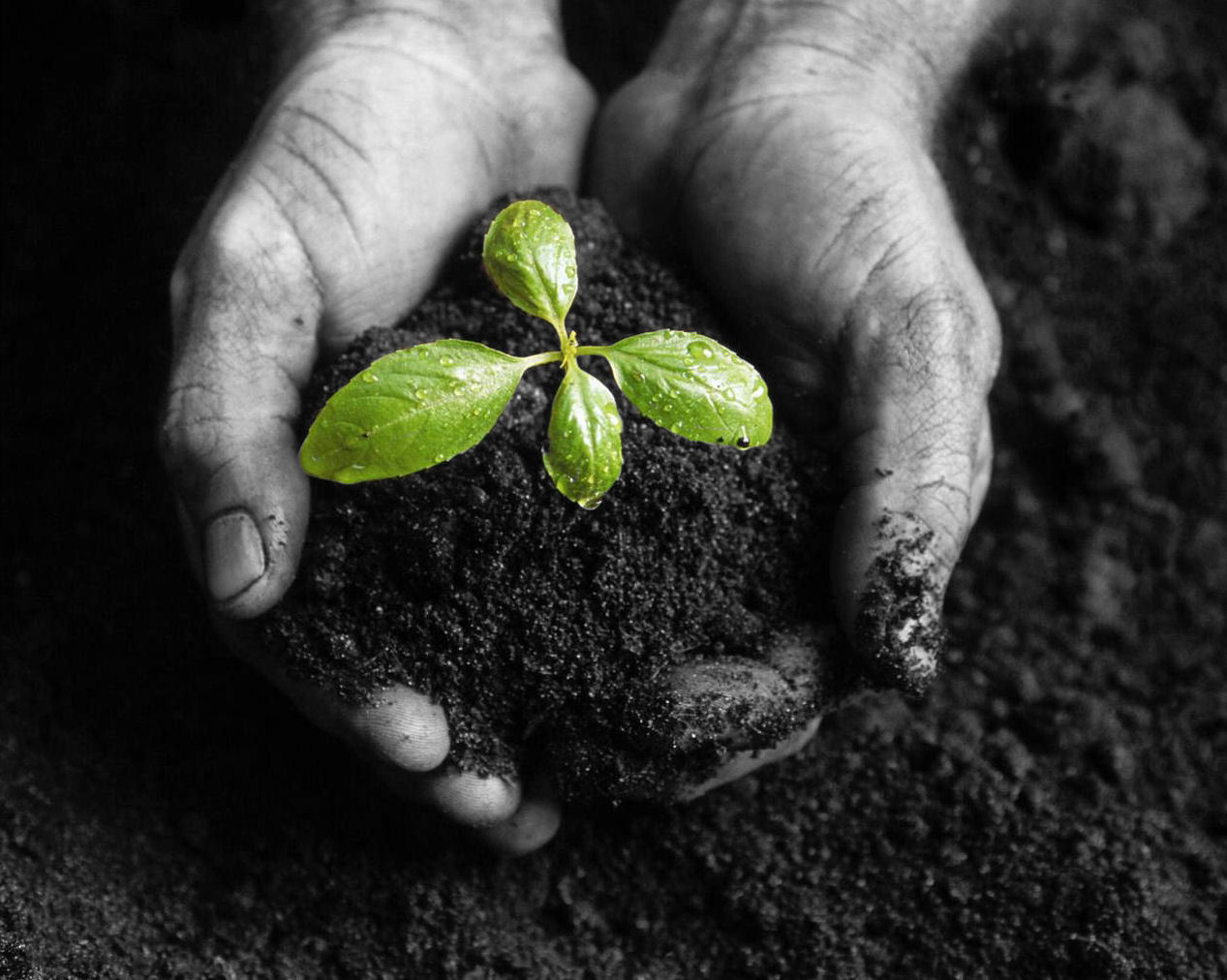 Time to Plant Those Seeds by Laurie Kolp